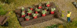 NOCH 13221 Rote Beete | Spur H0 online kaufen
