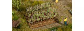 NOCH 13224 Weinreben mit blauen Trauben | Spur H0 online kaufen